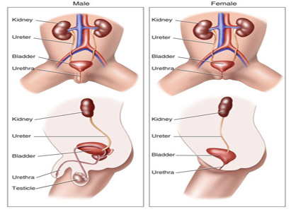Bladder Cancer Symptoms