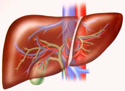 Triệu chứng ung thư gan